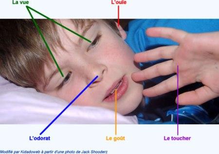 cinq-sens-enfant