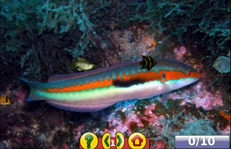 le jeu des poissons de Gcompris